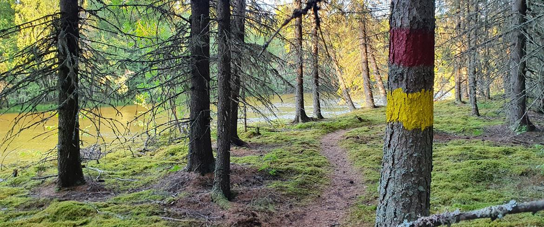 Ena halvan av den gula leden går längs älvfåran mot Långnäs.