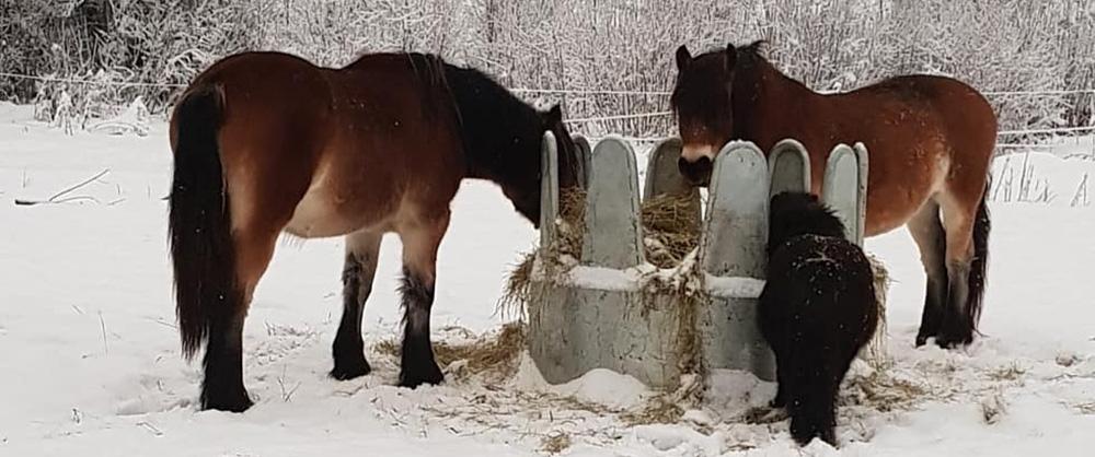 Matpaus hästhagen
