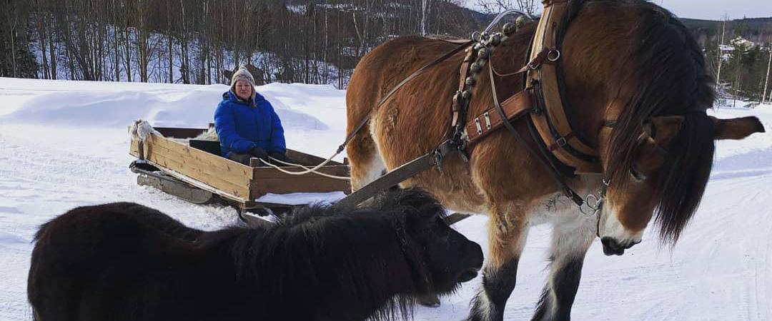 Häst och släde