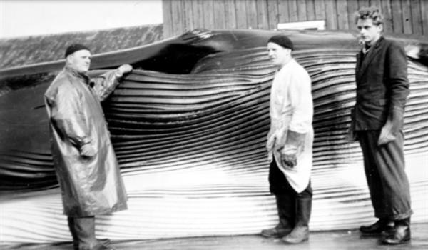 Lørdagstreff: Hestnes hvalfangststasjon