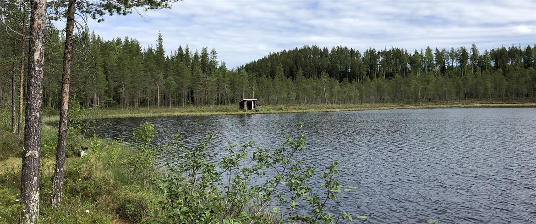 Södra Sågbergstjärn tjärnen