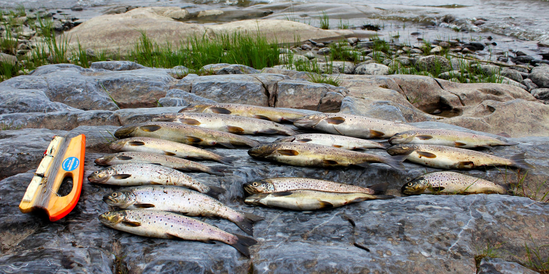 Fiskefangst. Copyright: Visit Innherred