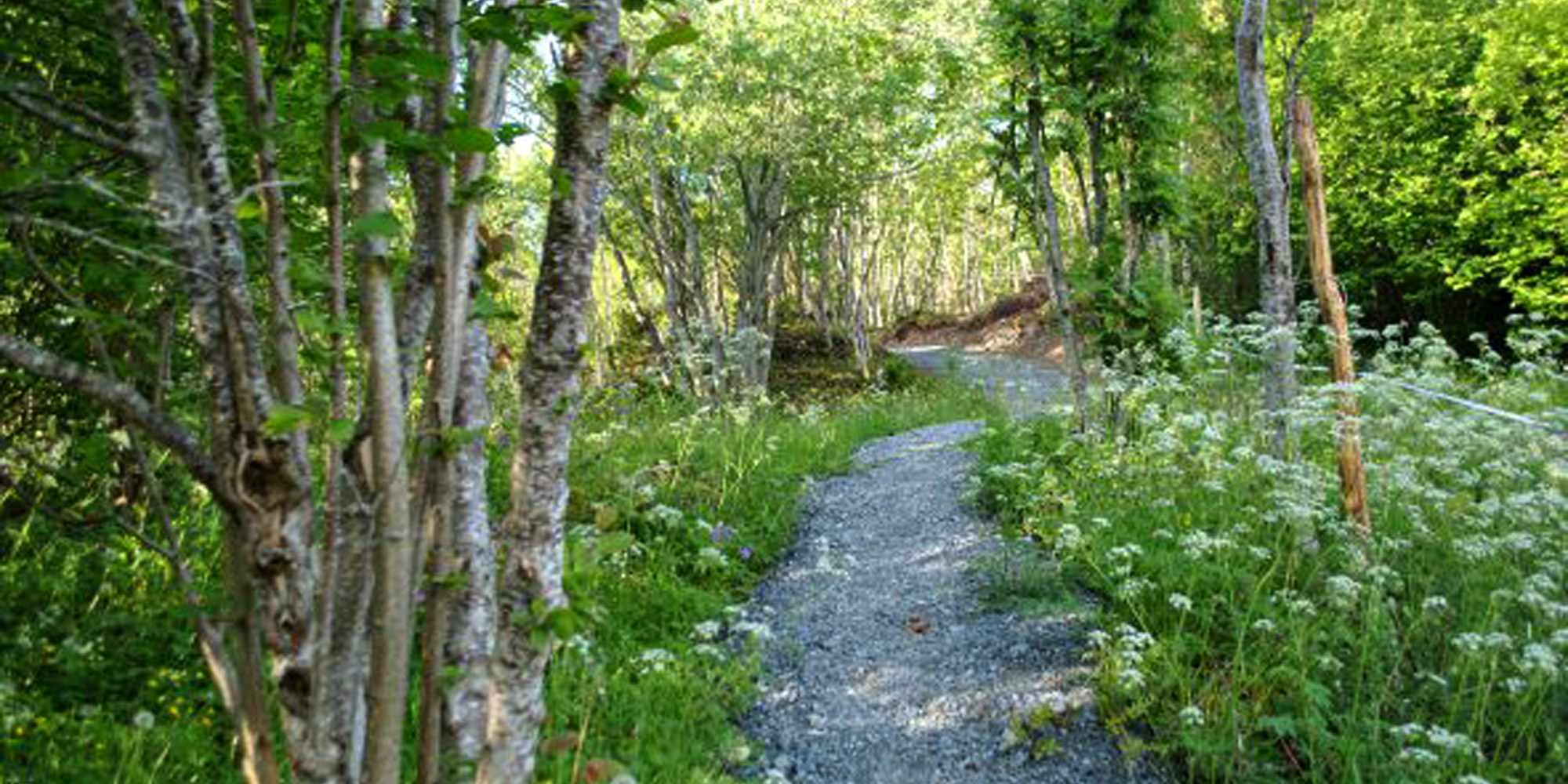The trail through the woods  to Spettspiret Cabin. Copyright: Letnes Gård