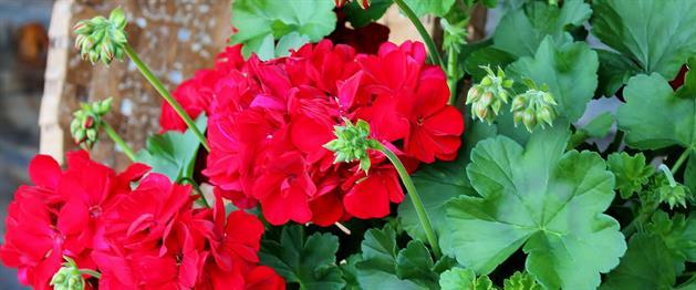 Blommor, Stina Eriksson