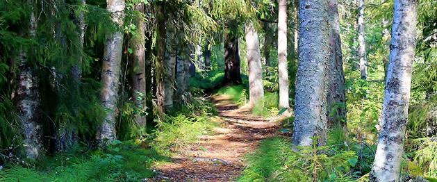 Strövstig i skog, Stina Eriksson