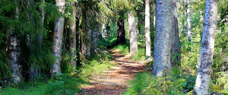 Strövstig i skog