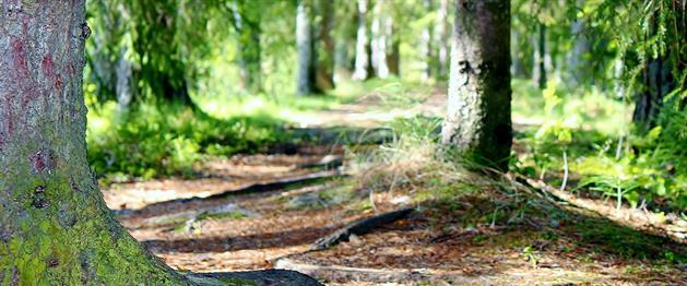 Skogsspår, Stina Eriksson