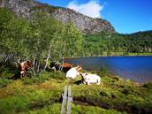 Topptur på Kviptefjell 903 moh* 3 timar/ 6km