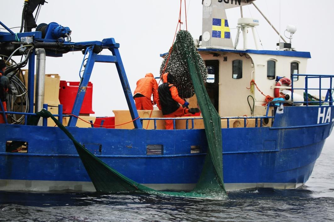 Löjromsfiskebåt