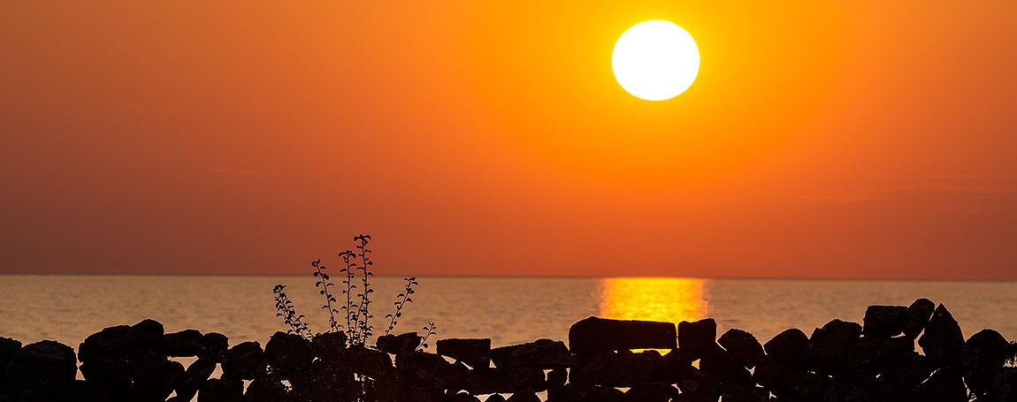 Solnedgång över gärdsgård