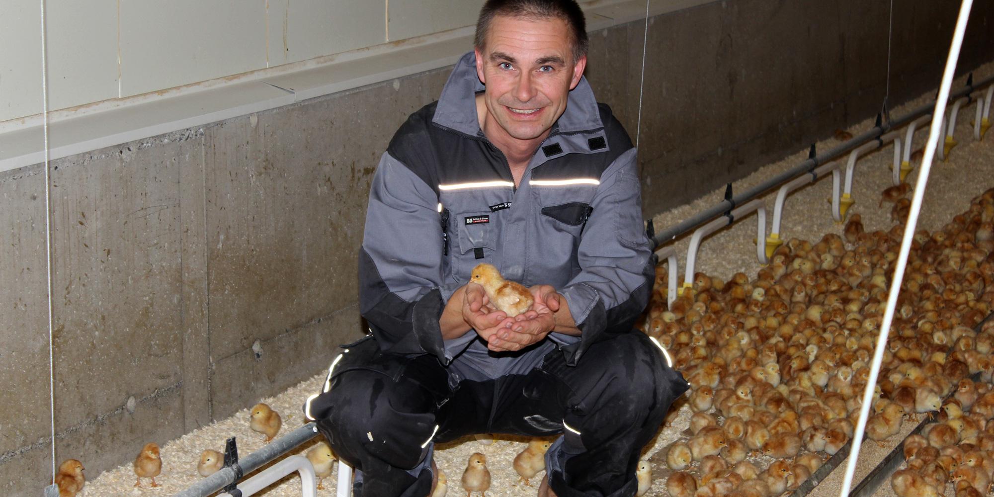 Blant kyllinger på Rias Egg. Copyright: Mikkelhaug