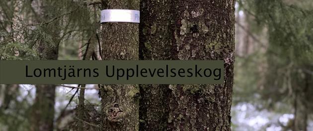 Lomtjärns upplevelseskog - reflexjakt, Stina Eriksson