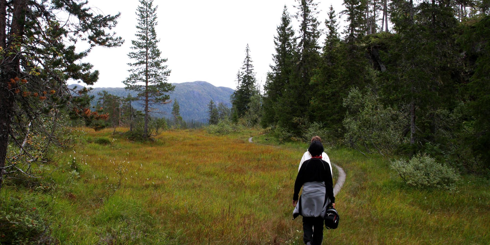 Stien til Norges Geografiske Midtpunkt er tilrettelagt med sviller. Copyright: Visit Innherred