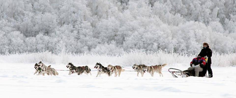 PIteå sleddogtours 3 1170x488