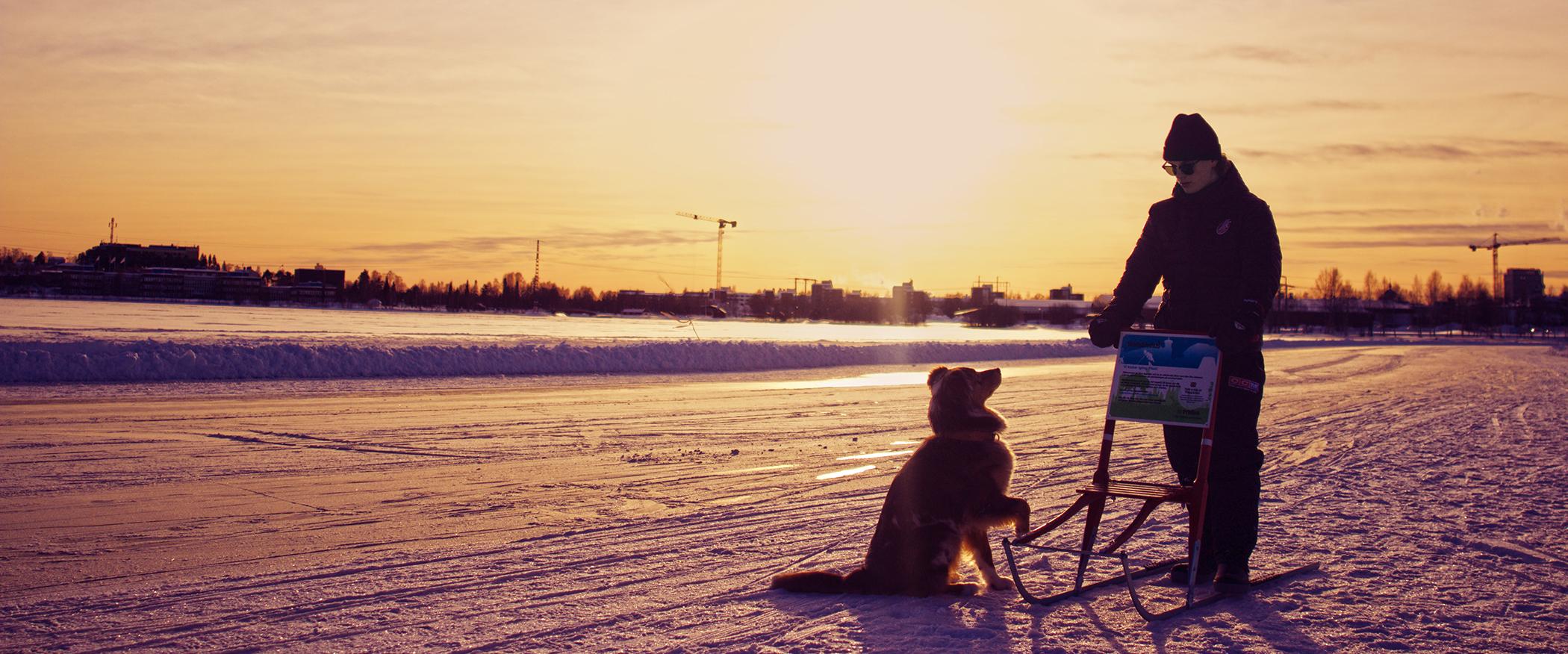 Sparktur med hund på isbanorna
