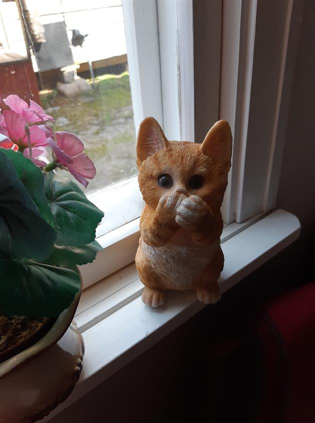 (s)katt-jakt