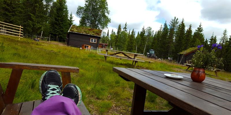 Relax at Holsingseteren summer mountain farm, whether you are there just to visit the farm or passing by during your hike. Copyright: Visit Innherred