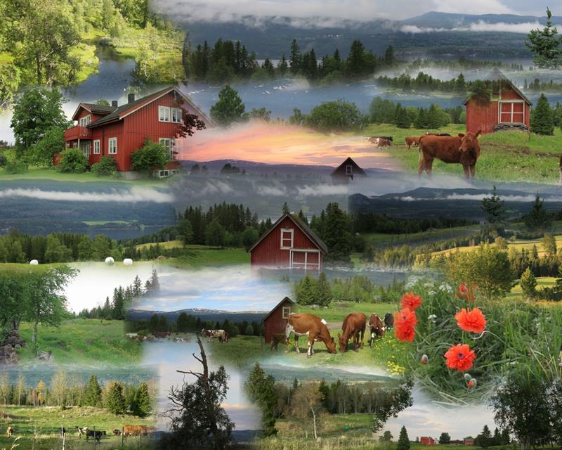 Gran Nordre farm in Snåsa: in the summer. Copyright: Gran Nordre