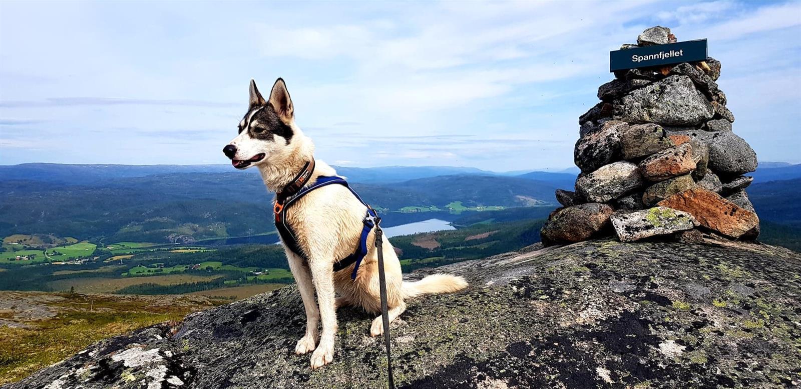 Turforslag: Spannfjellet 474 moh. (inkl. Vigdisvarden)