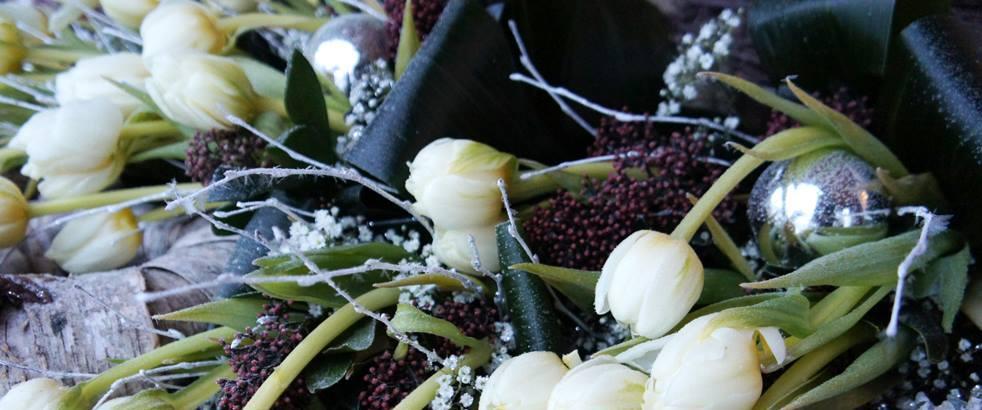 Vintertulpaner hos Piteå handel o trädgård