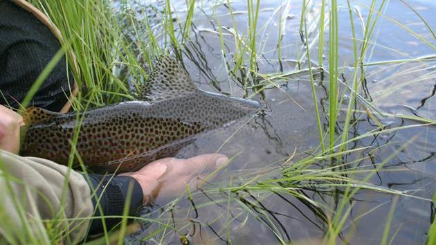 Fisk - tillbaka i sjön