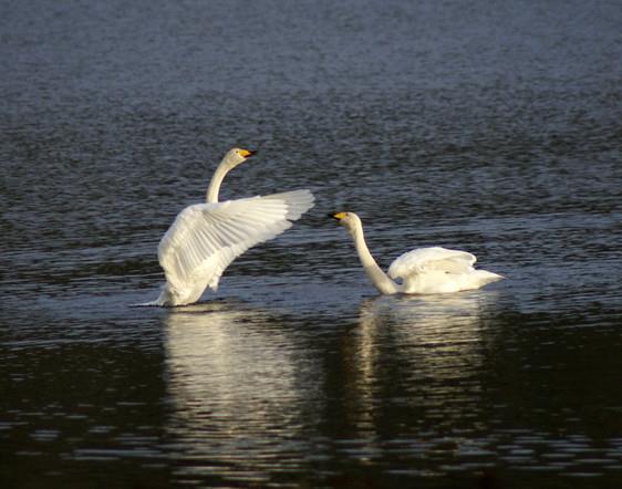 Flakkan og Øie natur- og fuglereservater