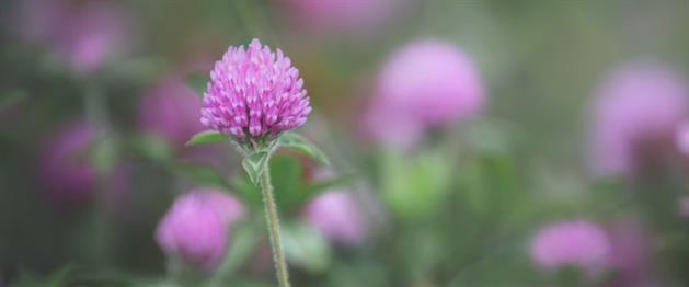 Blomma, Arkivbild