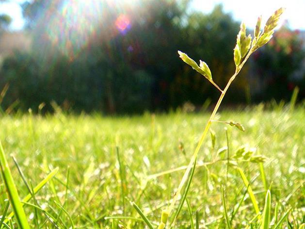 grässtråisolsken_Maria Andersson