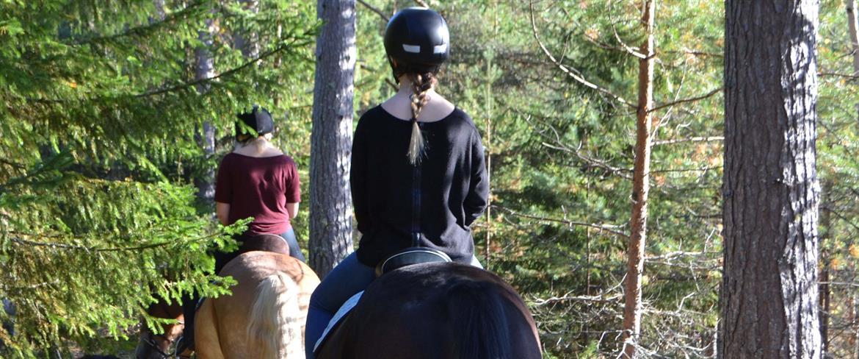 Hästar på tur längs stigarna runt Jössgården