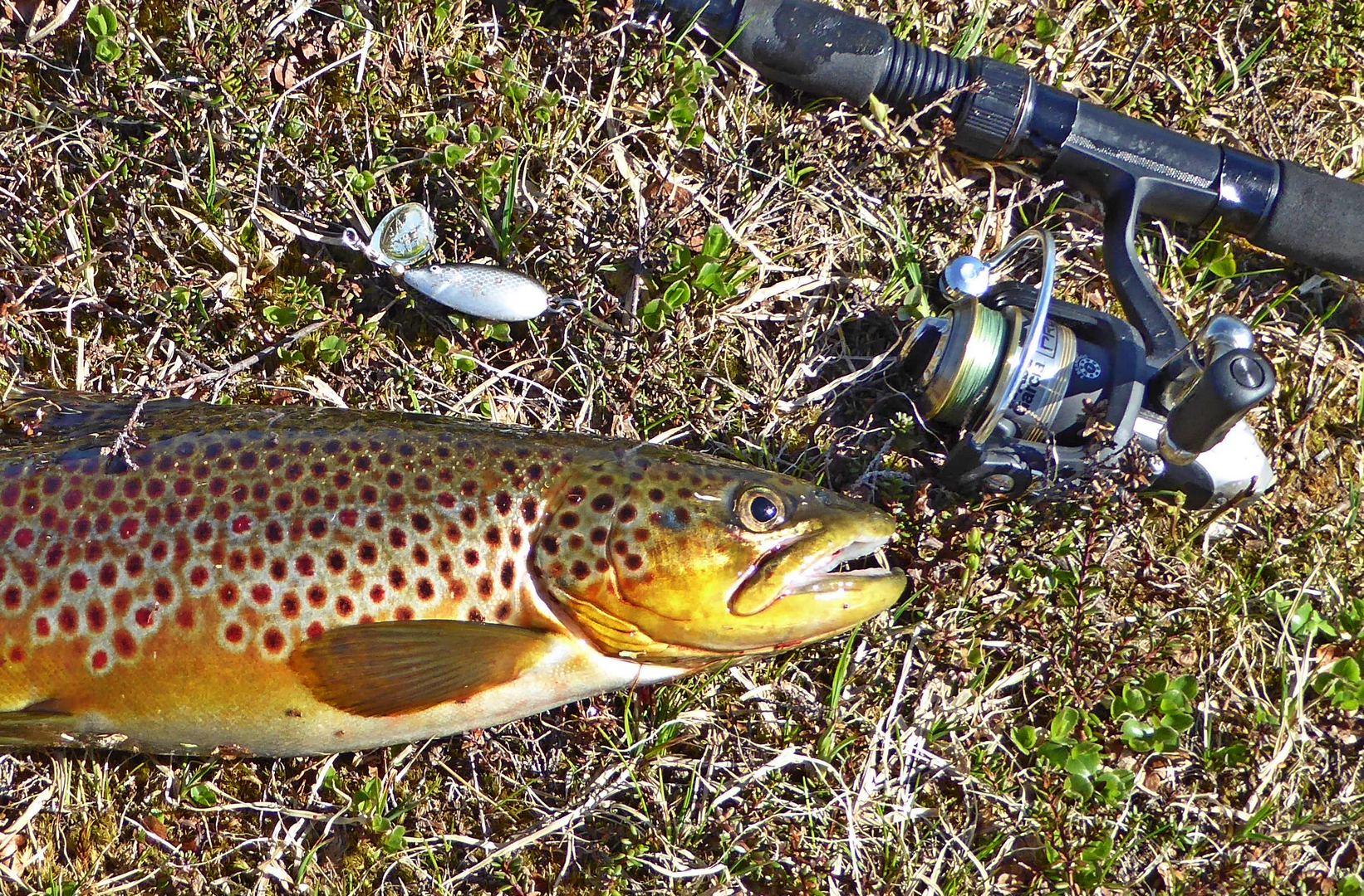 Fiske i Namsskogan