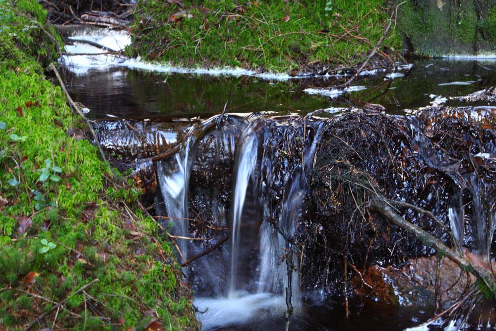 Skogsbad i Vinnalt
